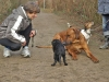 aaron_und_seine_hundefreunde