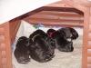 aika-babies-in-der-neuen-behausung