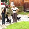 lauter-schwarze-hunde
