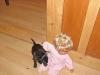 damian_puppi
