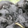 lauter-schwarze-koepfchen